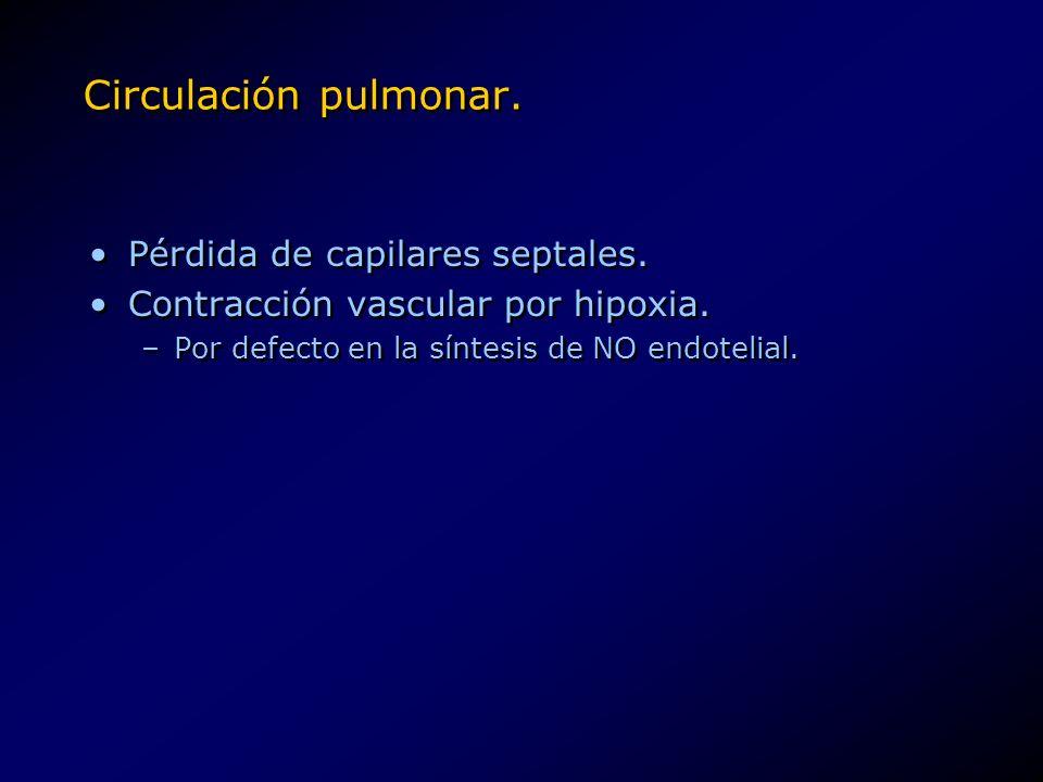 Circulación pulmonar. Pérdida de capilares septales.