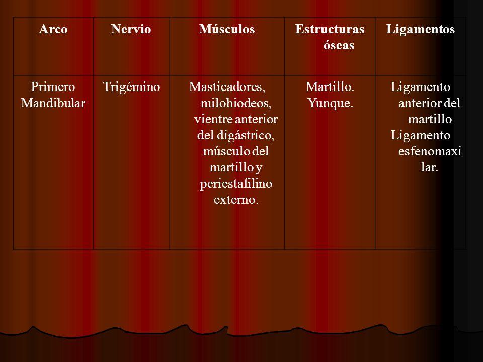 Arco Nervio Músculos Estructuras óseas Ligamentos