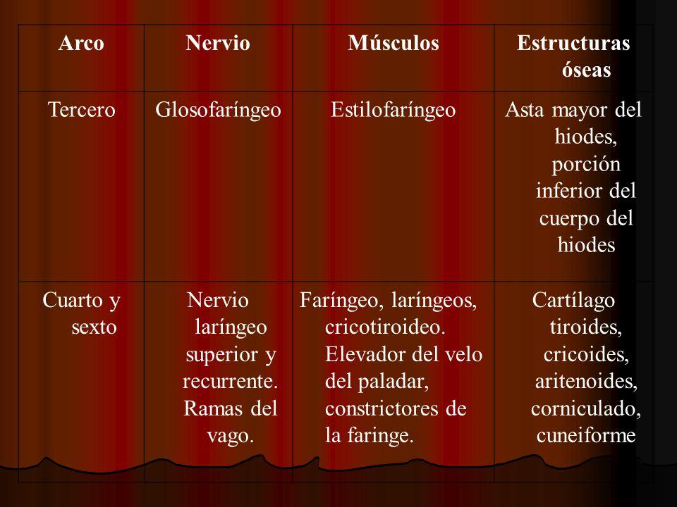 Arco Nervio Músculos Estructuras óseas