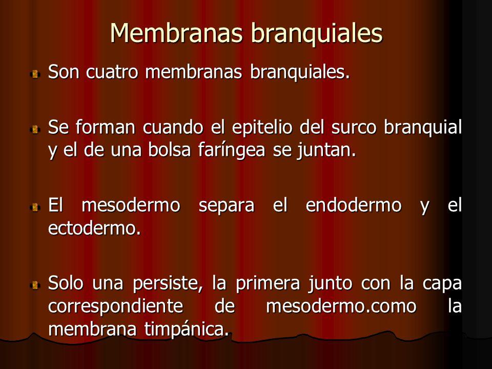 Membranas branquiales