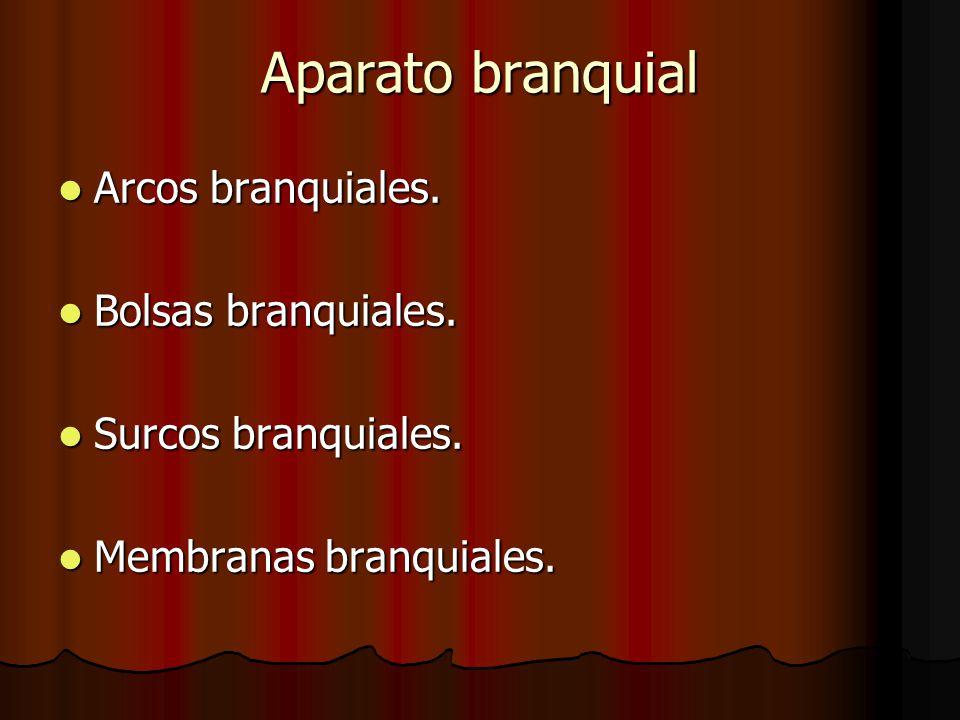 Aparato branquial Arcos branquiales. Bolsas branquiales.