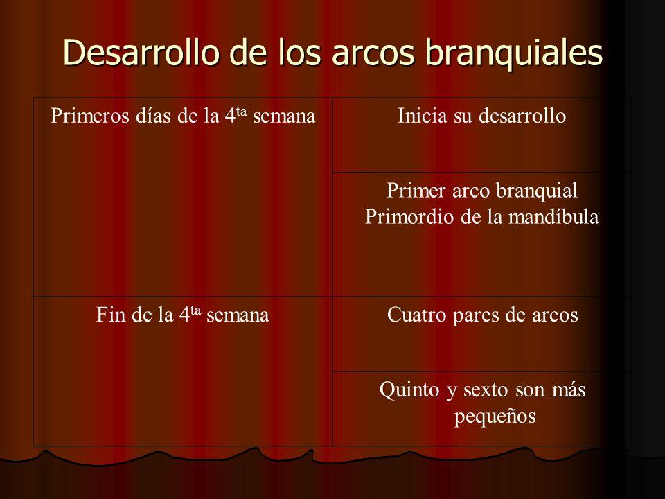 Desarrollo de los arcos branquiales