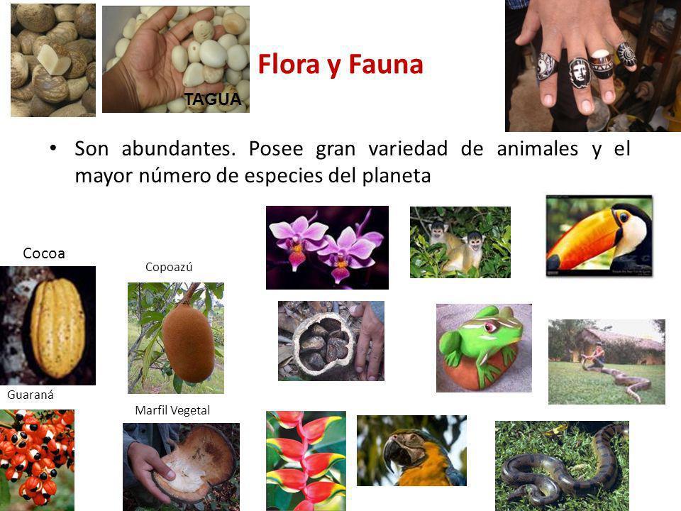 Flora y Fauna TAGUA. Son abundantes. Posee gran variedad de animales y el mayor número de especies del planeta.