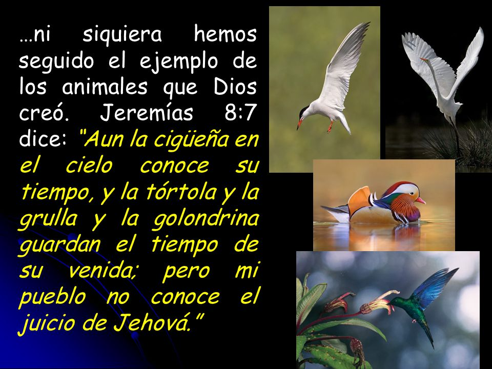 …ni siquiera hemos seguido el ejemplo de los animales que Dios creó