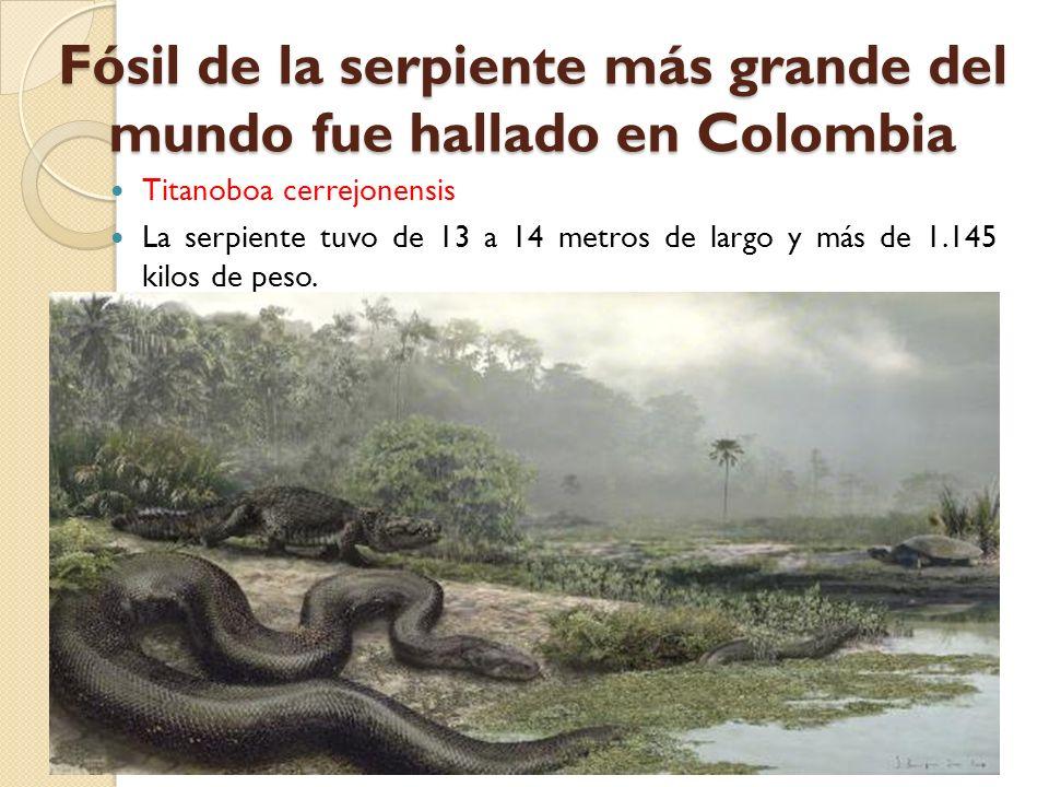 Fósil de la serpiente más grande del mundo fue hallado en Colombia