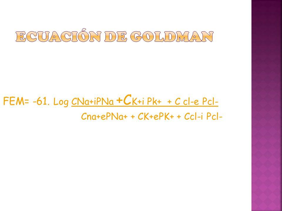 ECUACIÓN DE GOLDMAN FEM= -61. Log CNa+iPNa +CK+i Pk+ + C cl-e Pcl-