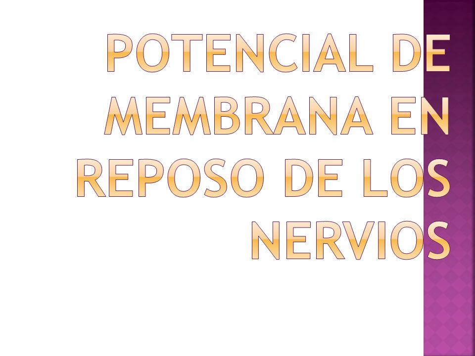 Potencial de Membrana en reposo de los Nervios