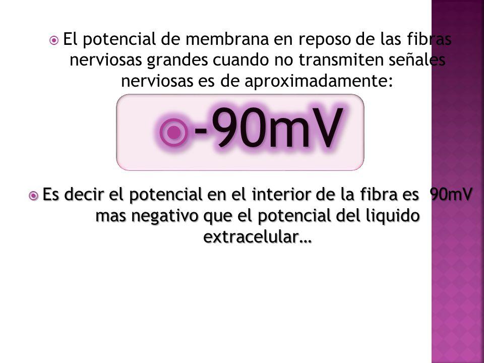 El potencial de membrana en reposo de las fibras nerviosas grandes cuando no transmiten señales nerviosas es de aproximadamente:
