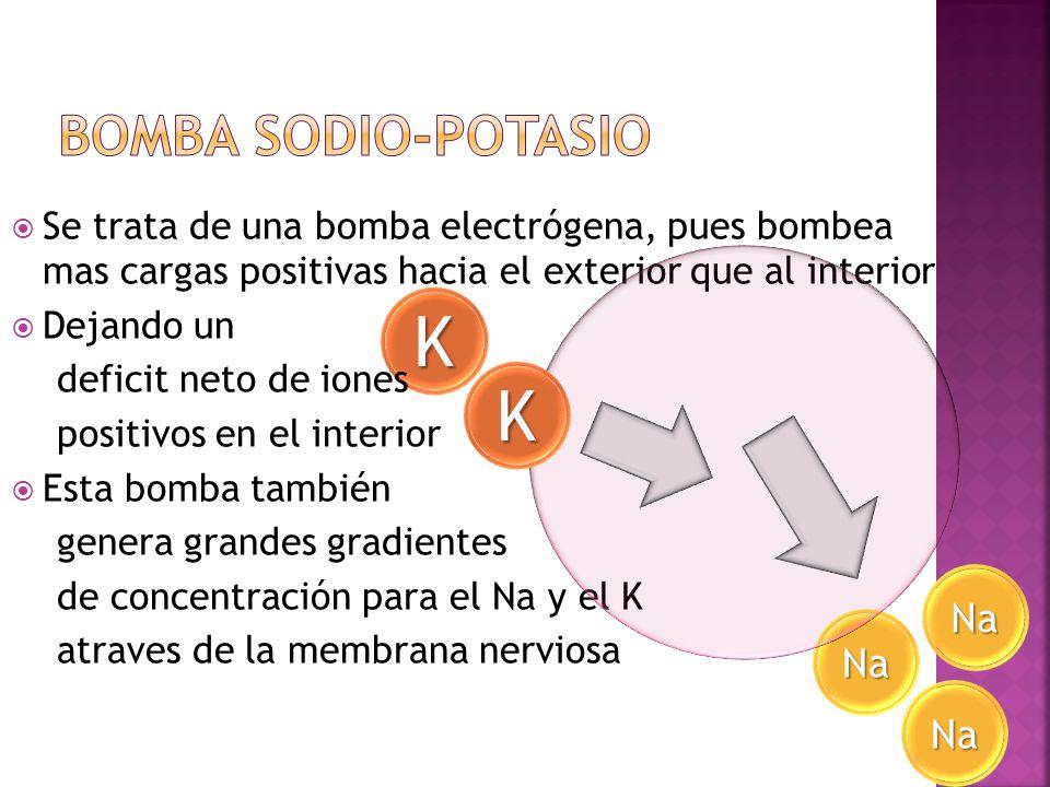 K K Bomba Sodio-Potasio Na Na Na
