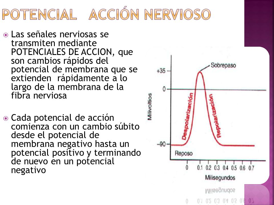 Potencial Acción Nervioso