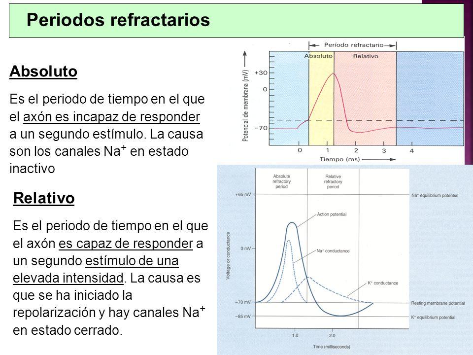 Periodos refractarios