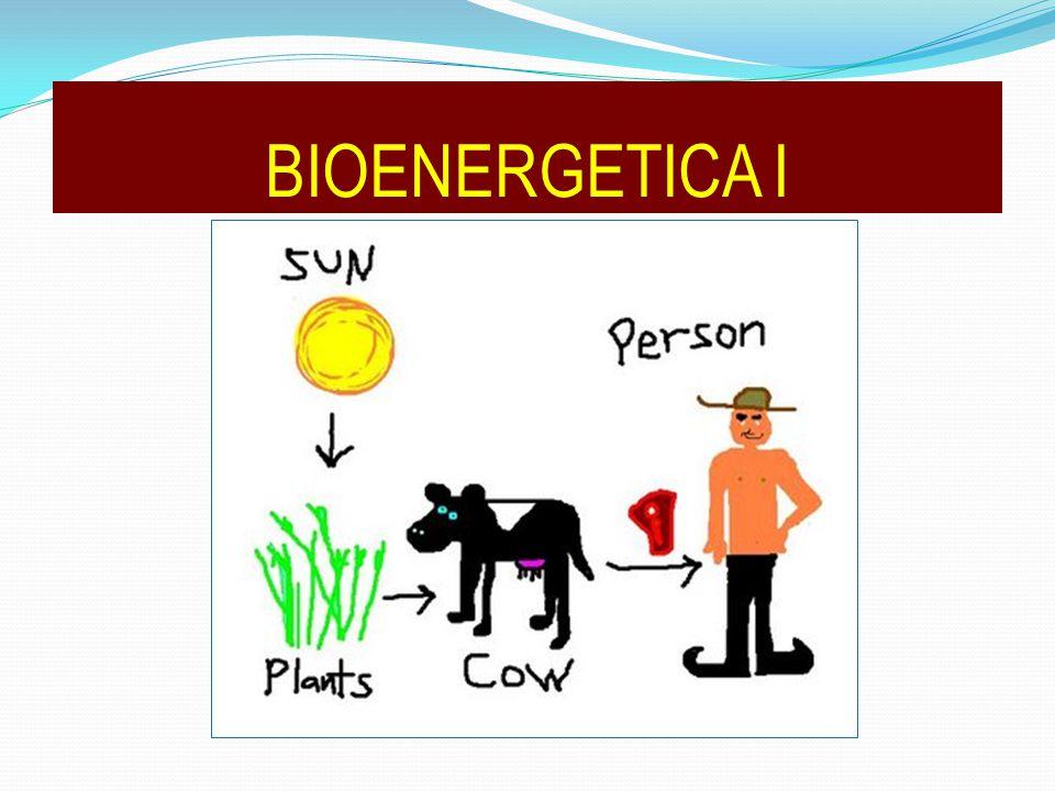 BIOENERGETICA I
