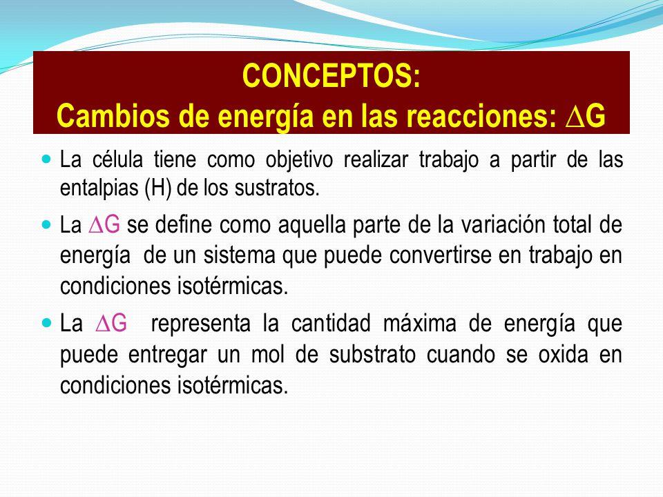 CONCEPTOS: Cambios de energía en las reacciones: ∆G
