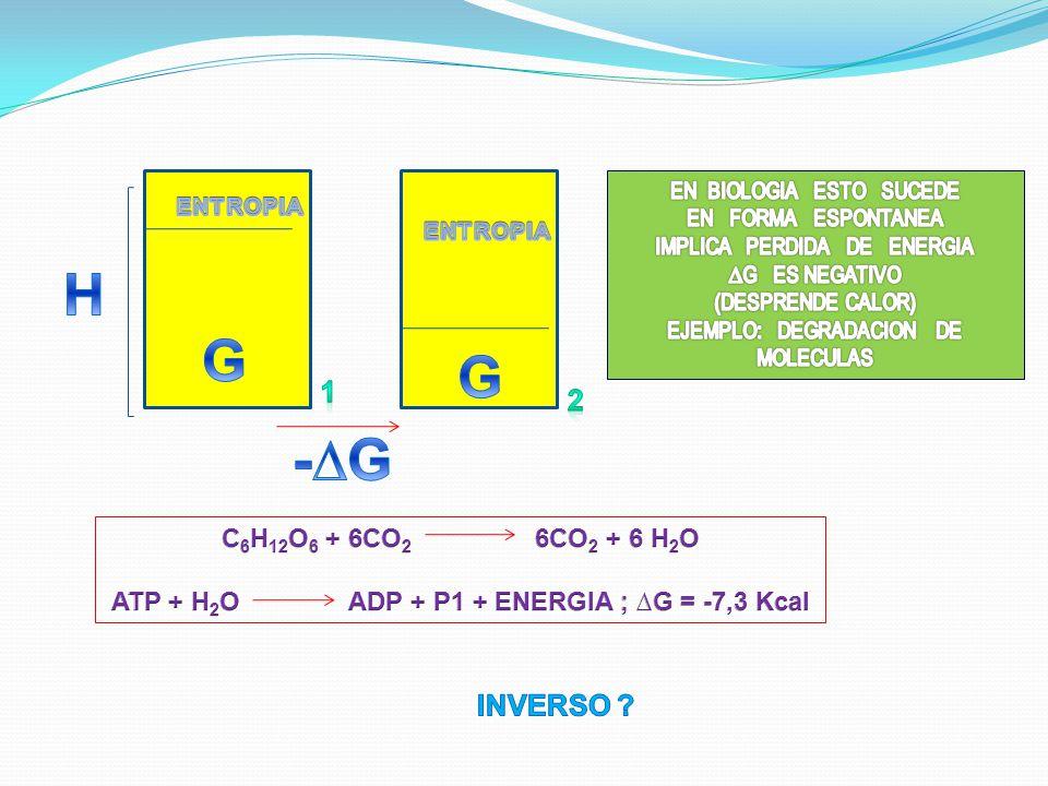 ATP + H2O ADP + P1 + ENERGIA ; ∆G = -7,3 Kcal