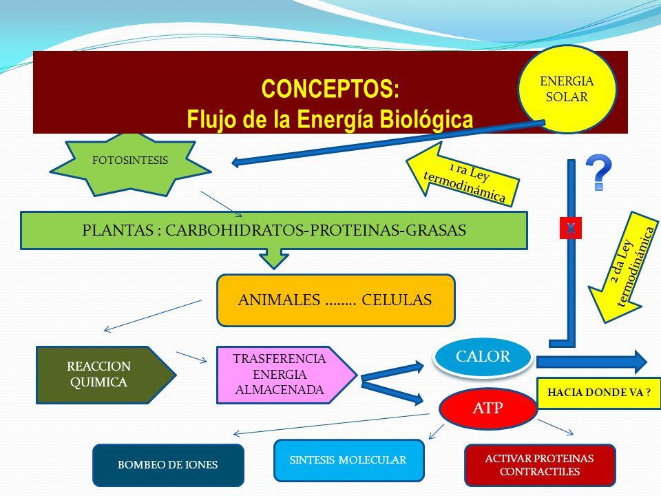 CONCEPTOS: Flujo de la Energía Biológica