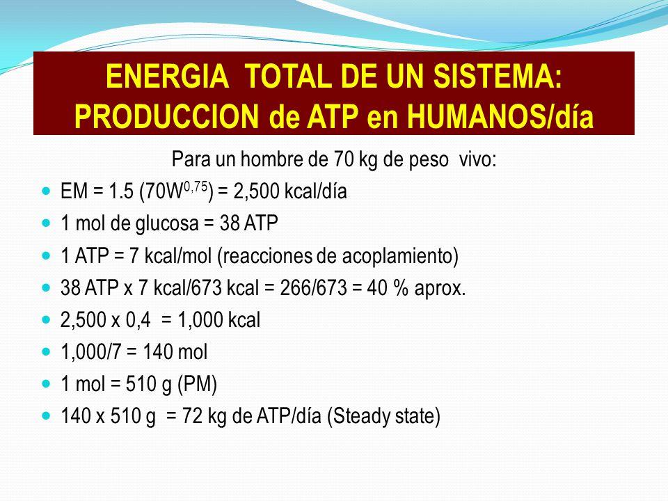 ENERGIA TOTAL DE UN SISTEMA: PRODUCCION de ATP en HUMANOS/día