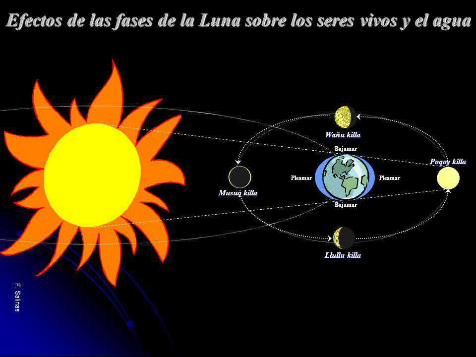 Efectos de las fases de la Luna sobre los seres vivos y el agua