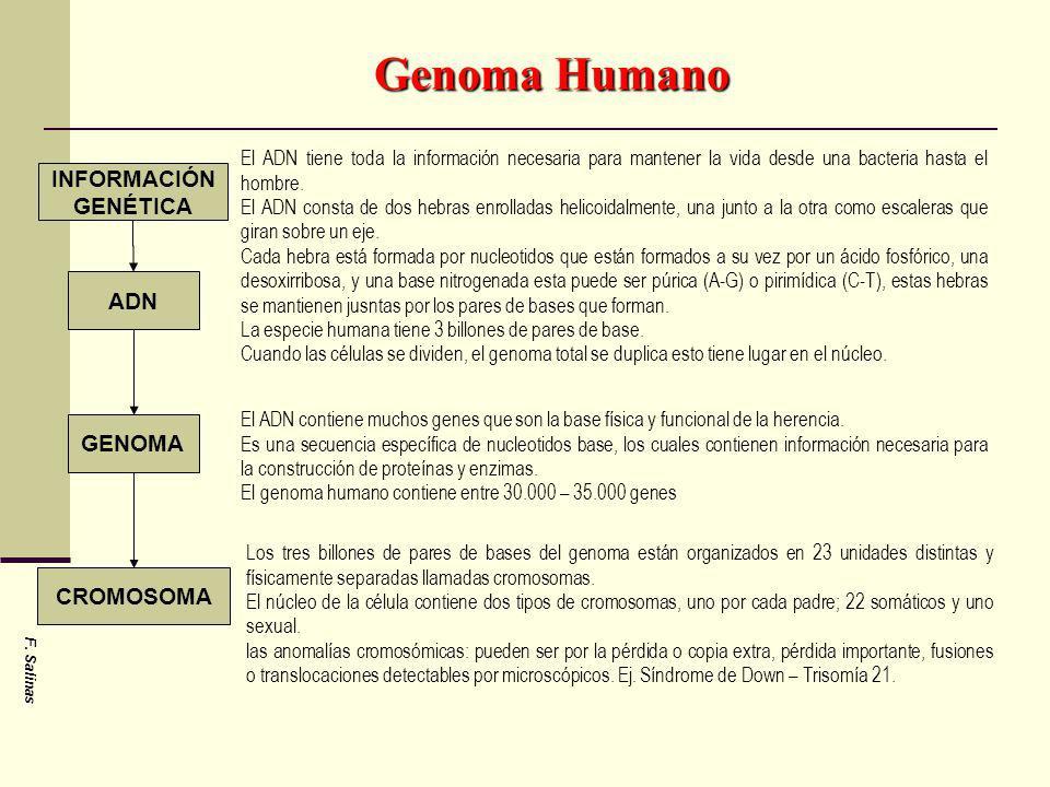 Genoma Humano INFORMACIÓN GENÉTICA ADN GENOMA CROMOSOMA
