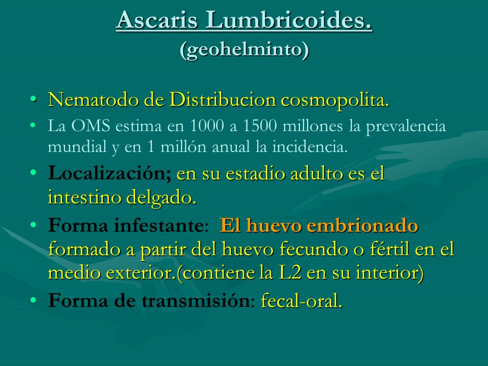 Ascaris Lumbricoides. (geohelminto)