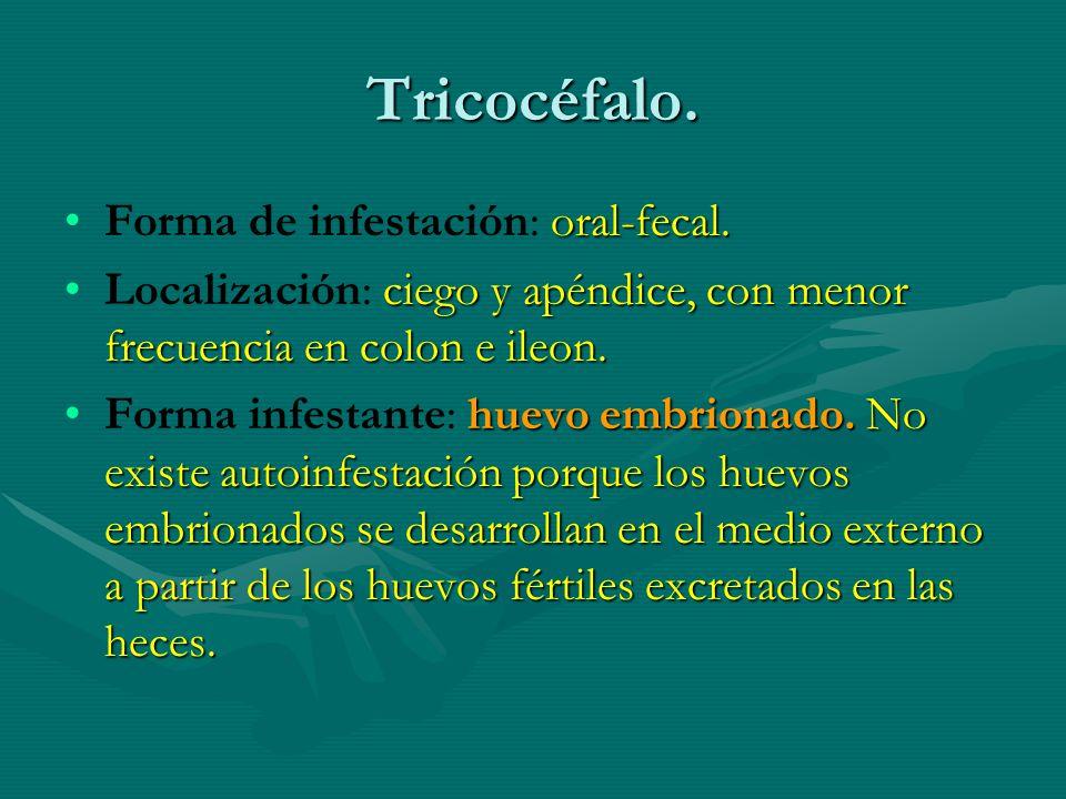 Tricocéfalo. Forma de infestación: oral-fecal.