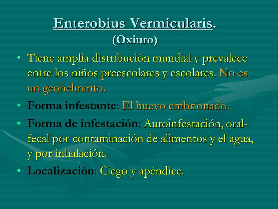 Enterobius Vermicularis. (Oxiuro)