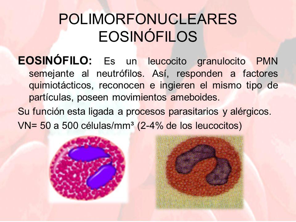 POLIMORFONUCLEARES EOSINÓFILOS