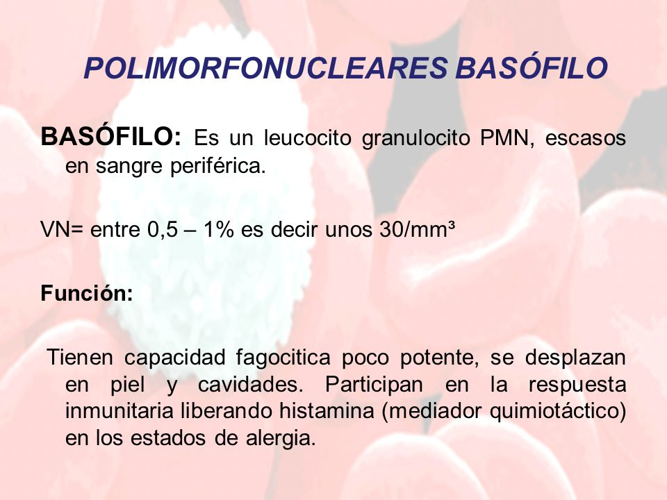 POLIMORFONUCLEARES BASÓFILO