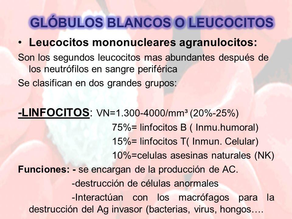 GLÓBULOS BLANCOS O LEUCOCITOS