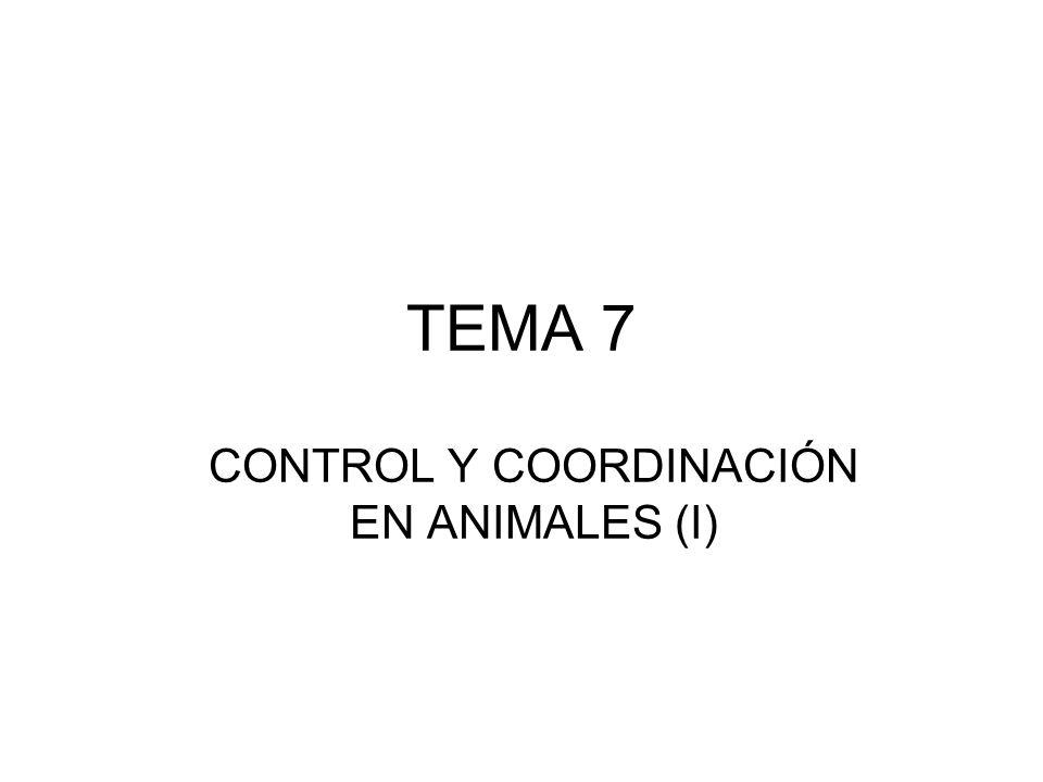 CONTROL Y COORDINACIÓN EN ANIMALES (I)