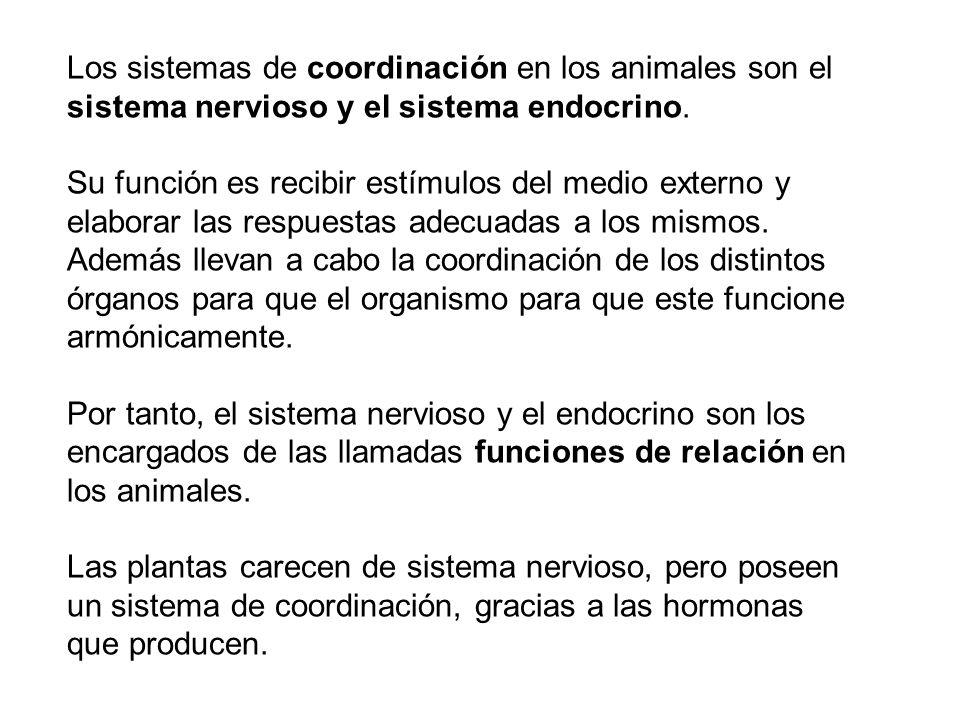 Los sistemas de coordinación en los animales son el sistema nervioso y el sistema endocrino.