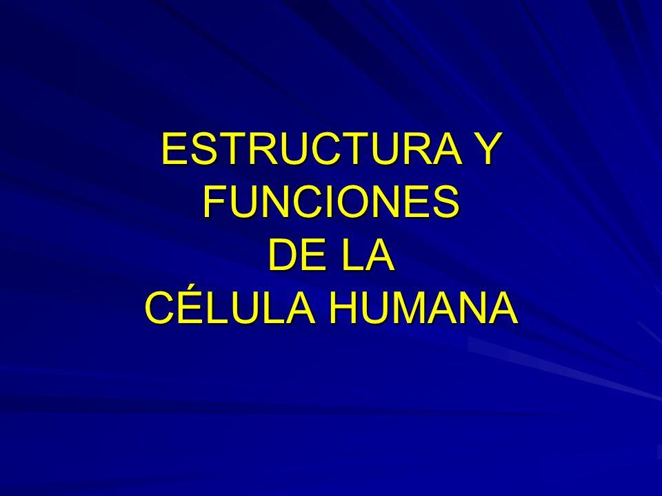 ESTRUCTURA Y FUNCIONES DE LA CÉLULA HUMANA