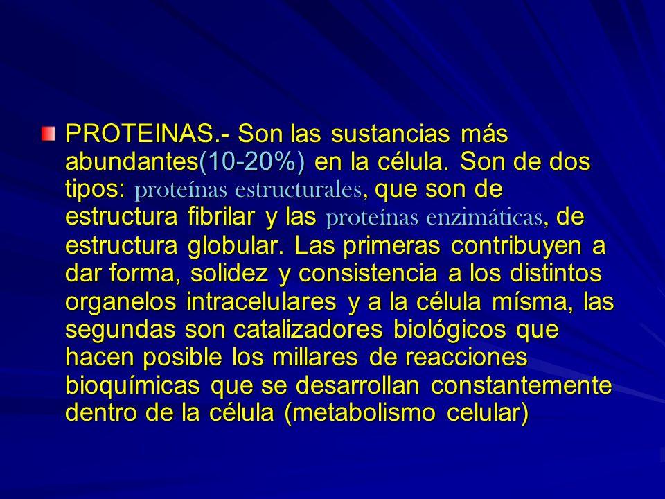 PROTEINAS. - Son las sustancias más abundantes(10-20%) en la célula