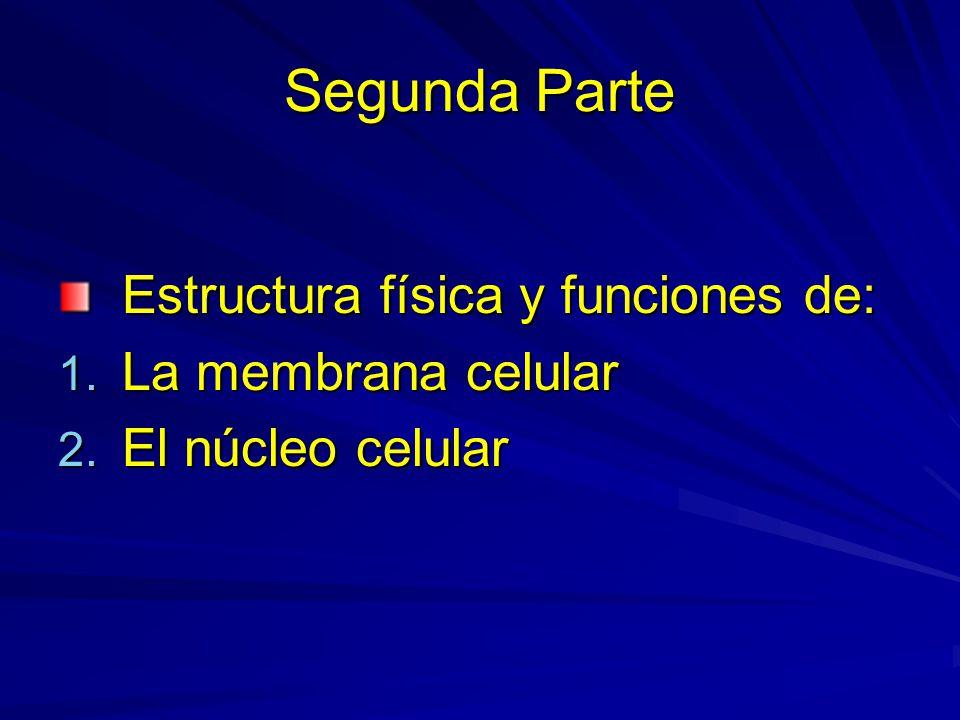 Segunda Parte Estructura física y funciones de: La membrana celular