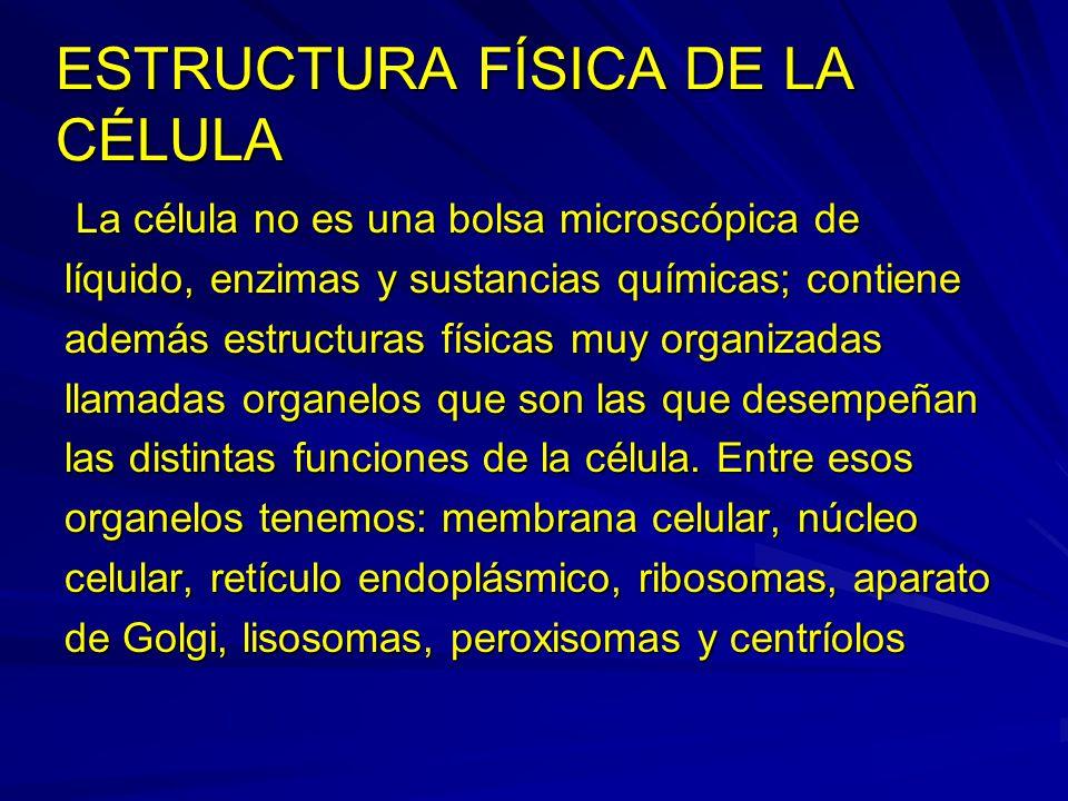 ESTRUCTURA FÍSICA DE LA CÉLULA