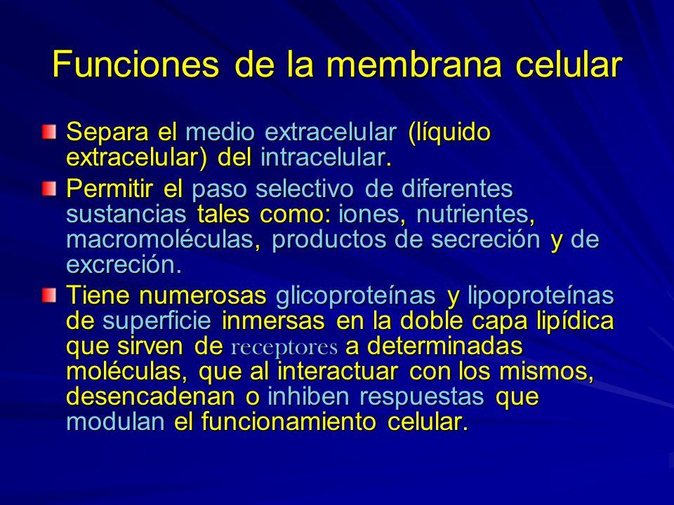 Funciones de la membrana celular