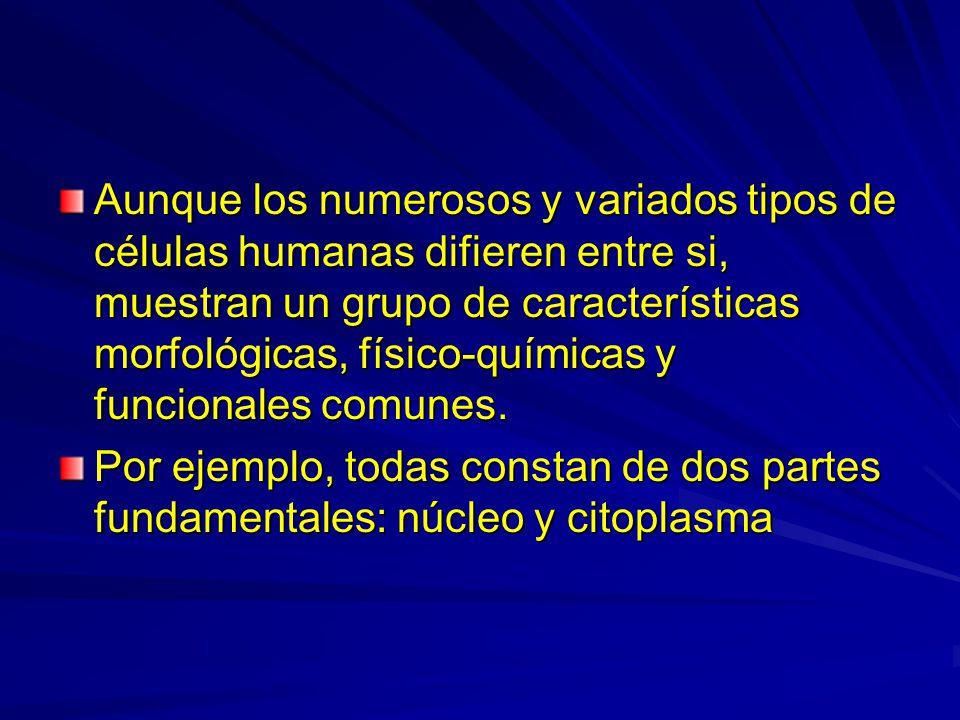 Aunque los numerosos y variados tipos de células humanas difieren entre si, muestran un grupo de características morfológicas, físico-químicas y funcionales comunes.