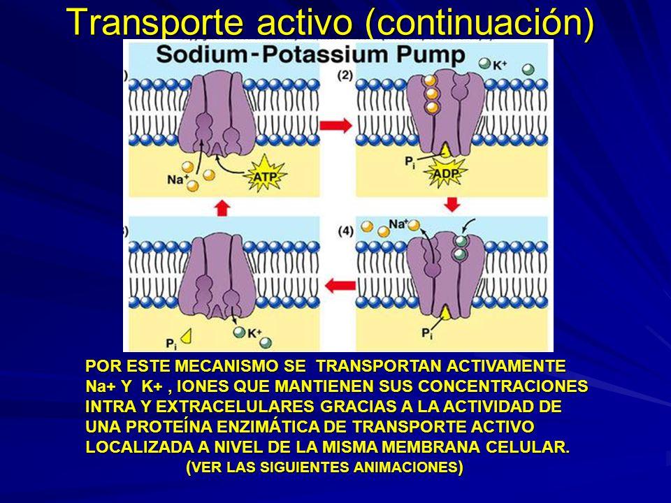 Transporte activo (continuación)