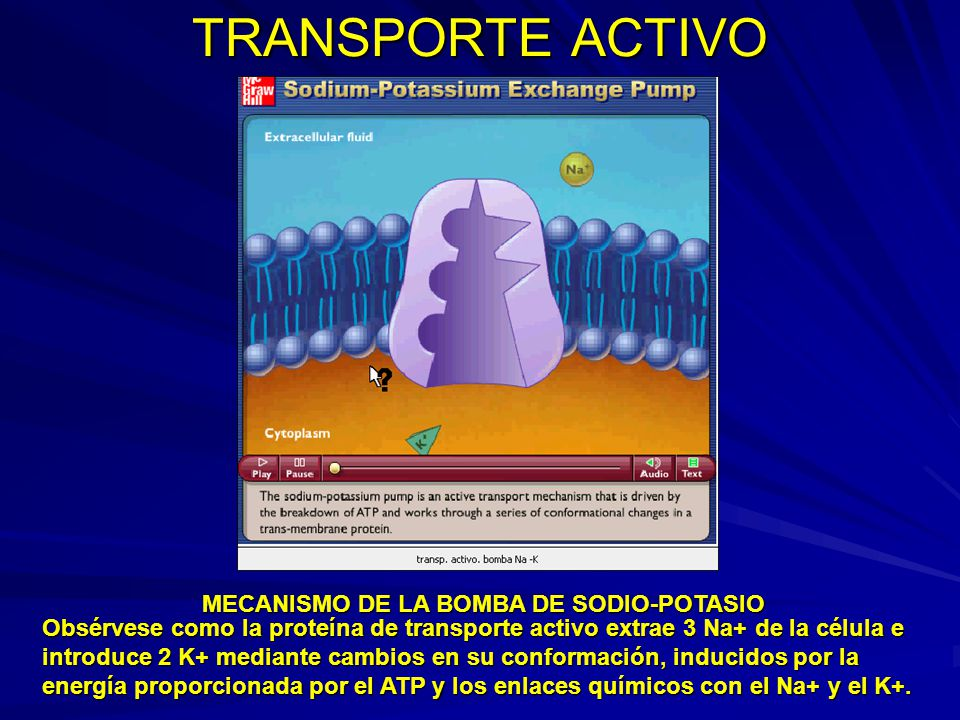 TRANSPORTE ACTIVO MECANISMO DE LA BOMBA DE SODIO-POTASIO