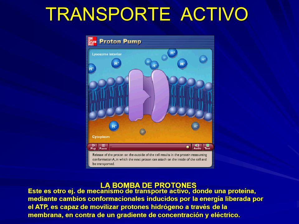 TRANSPORTE ACTIVO LA BOMBA DE PROTONES