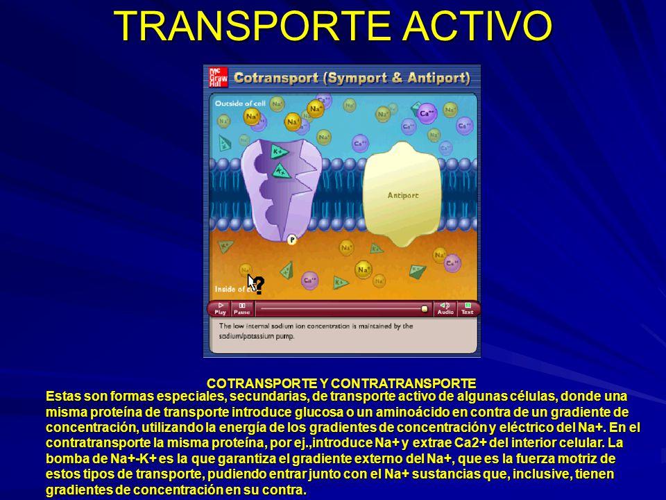 TRANSPORTE ACTIVO COTRANSPORTE Y CONTRATRANSPORTE