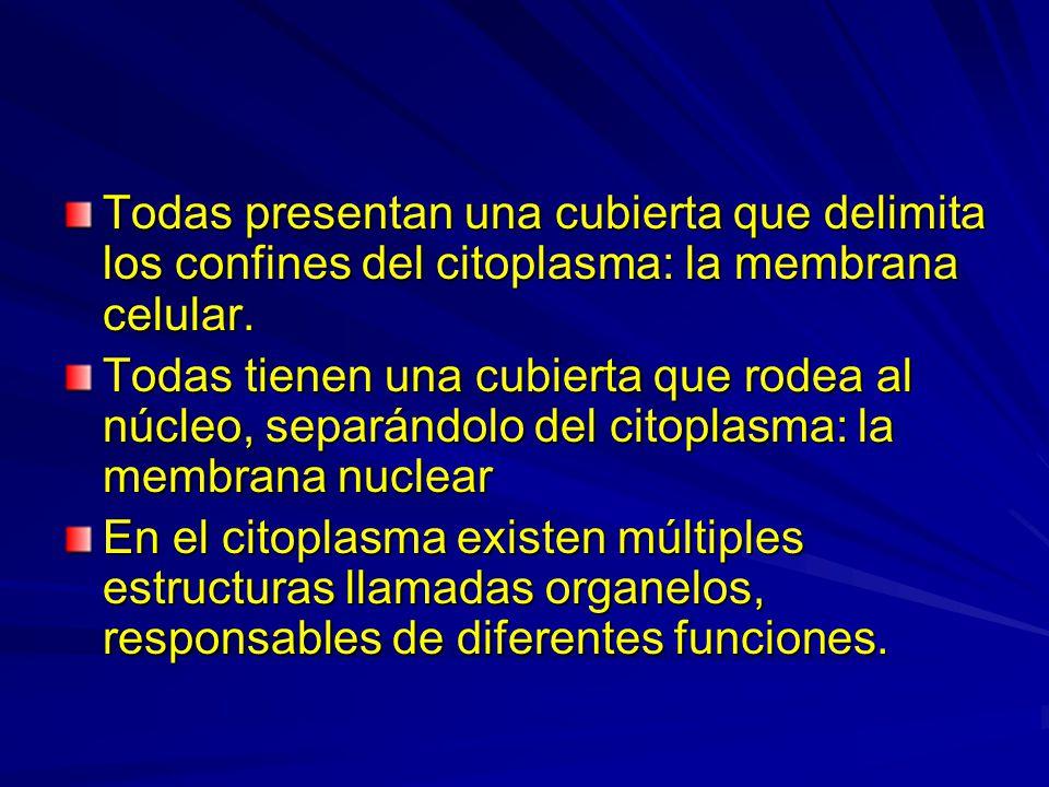 Todas presentan una cubierta que delimita los confines del citoplasma: la membrana celular.