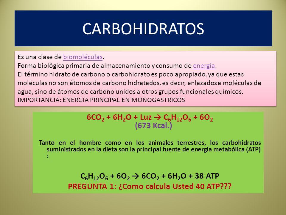 PREGUNTA 1: ¿Como calcula Usted 40 ATP