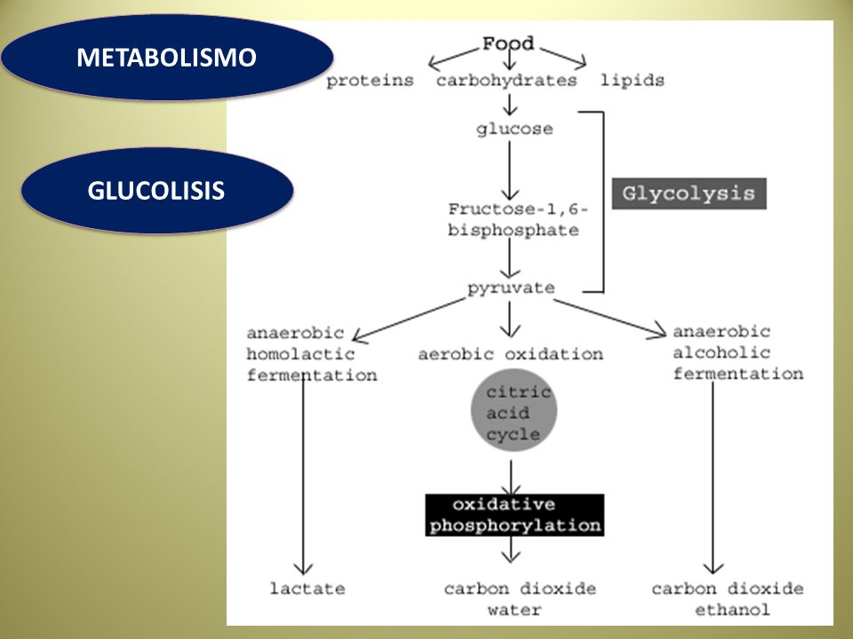METABOLISMO GLUCOLISIS