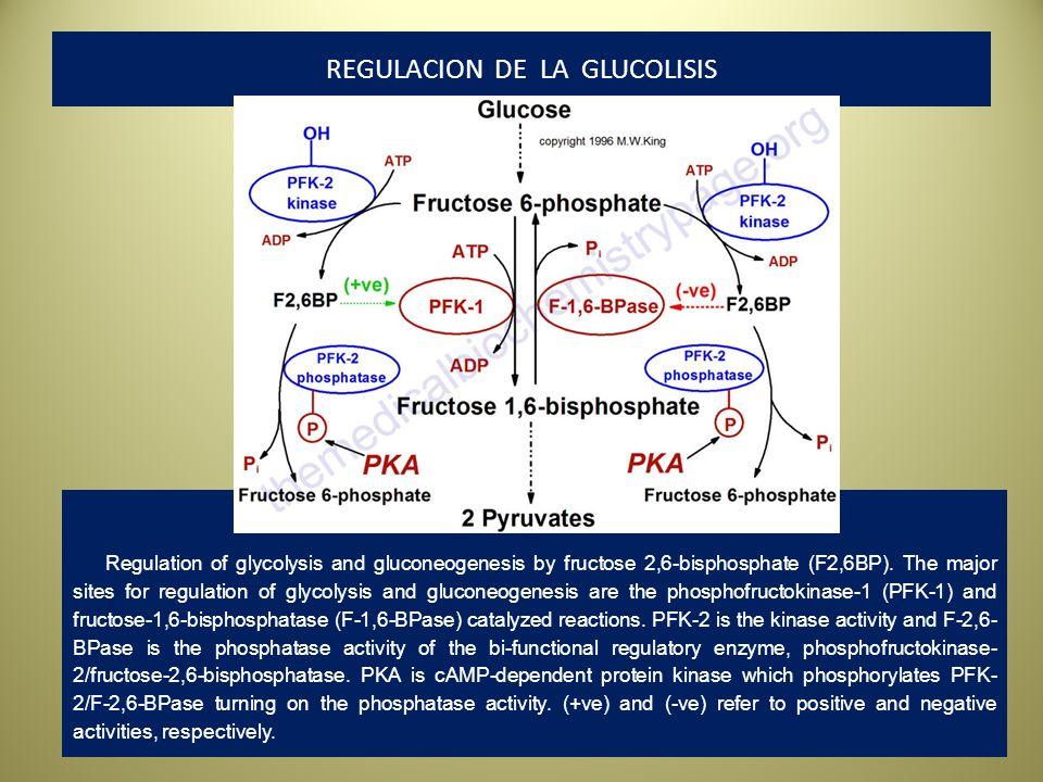 REGULACION DE LA GLUCOLISIS