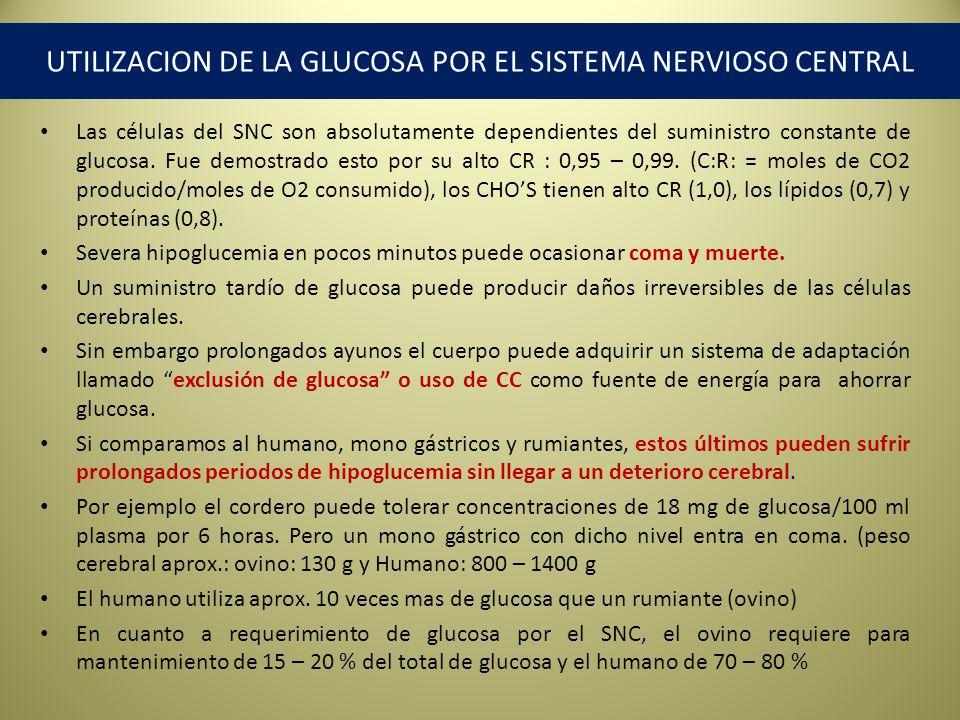 UTILIZACION DE LA GLUCOSA POR EL SISTEMA NERVIOSO CENTRAL