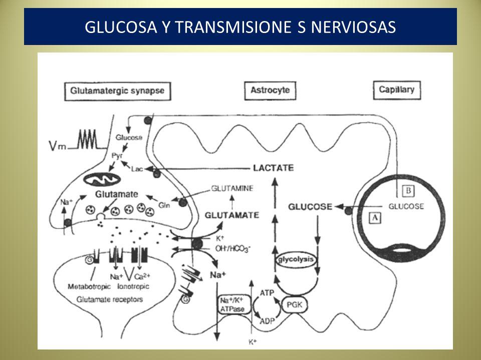 GLUCOSA Y TRANSMISIONE S NERVIOSAS