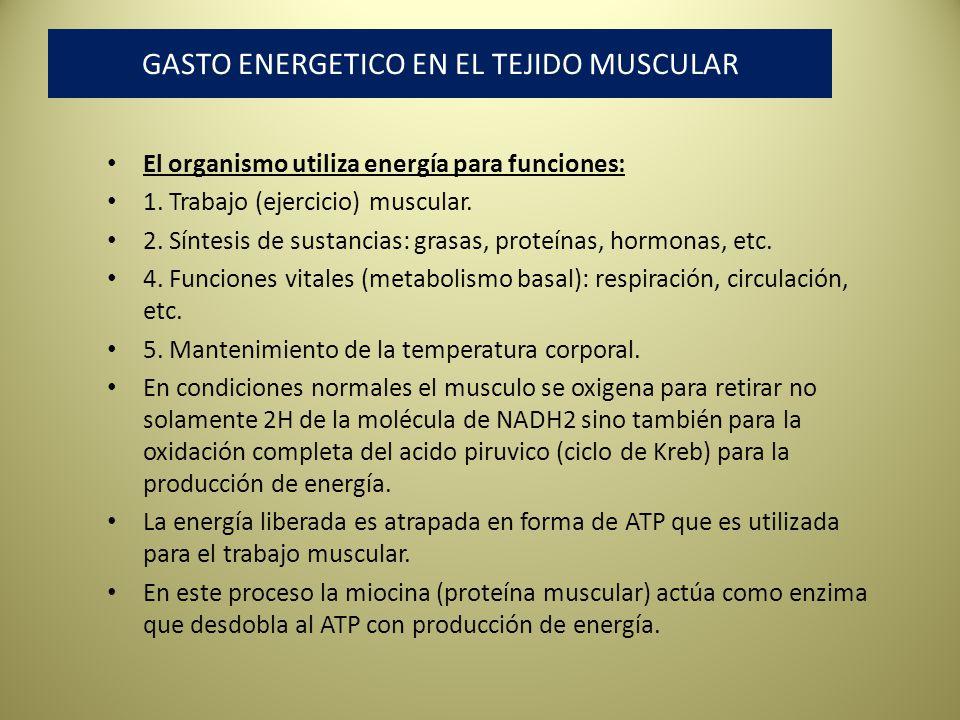 GASTO ENERGETICO EN EL TEJIDO MUSCULAR