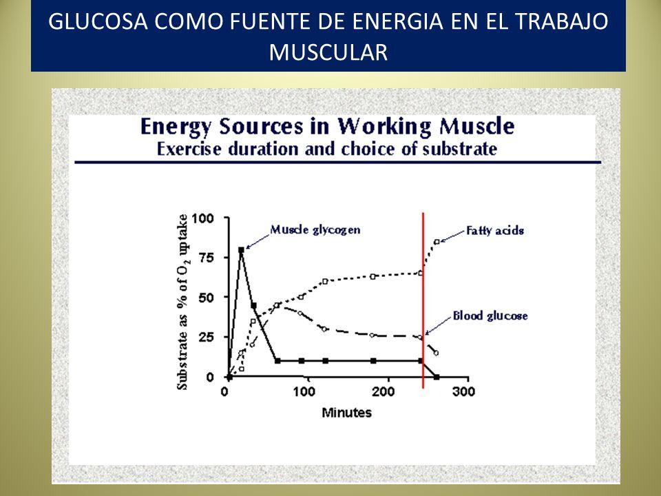 GLUCOSA COMO FUENTE DE ENERGIA EN EL TRABAJO MUSCULAR