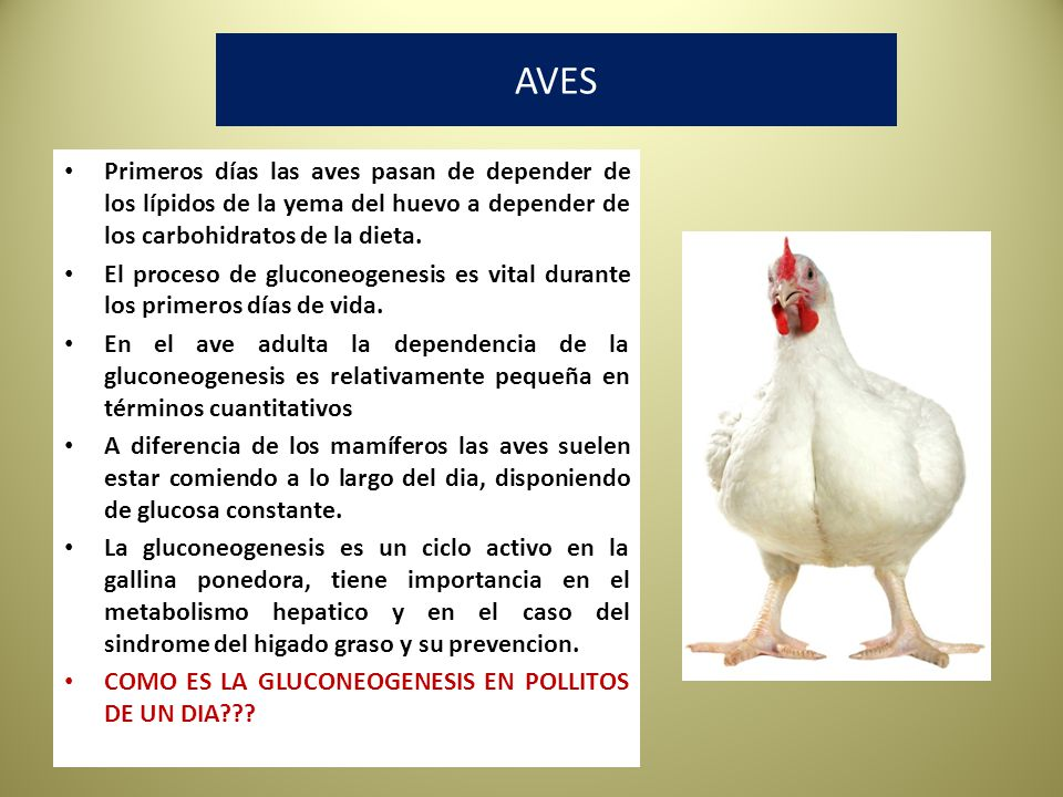 AVES Primeros días las aves pasan de depender de los lípidos de la yema del huevo a depender de los carbohidratos de la dieta.