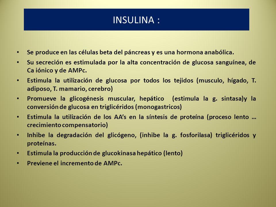 INSULINA : Se produce en las células beta del páncreas y es una hormona anabólica.